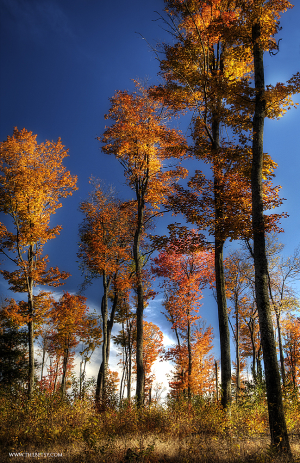 autumn, leaves, losey vista, sunlit, trees, fall,
