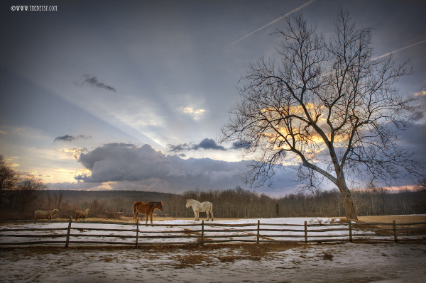 hopewell horses farm fields sunrise clouds trees f