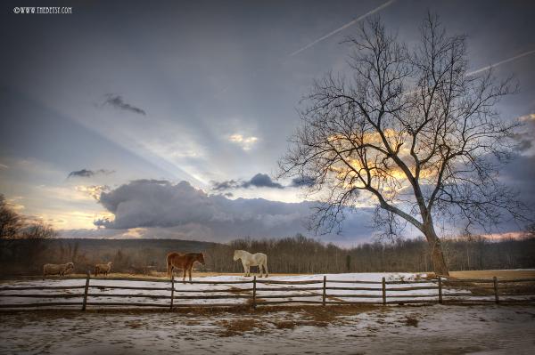 hopewell horses farm fields sunrise clouds trees f