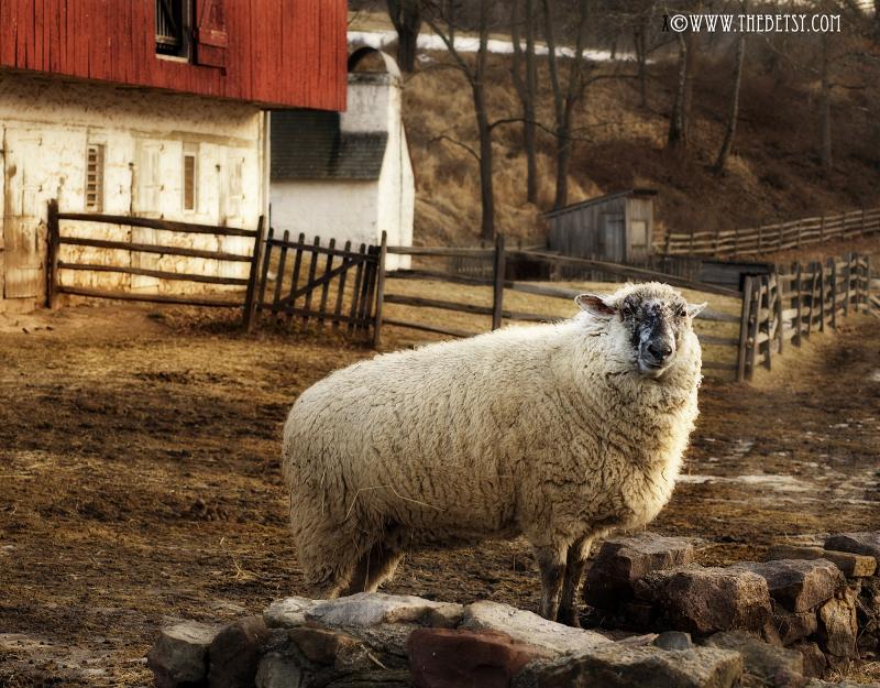 sheep farm barn red morning sunrise hopewell