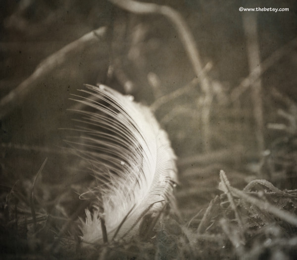feather, field, spring, green lane, texture
