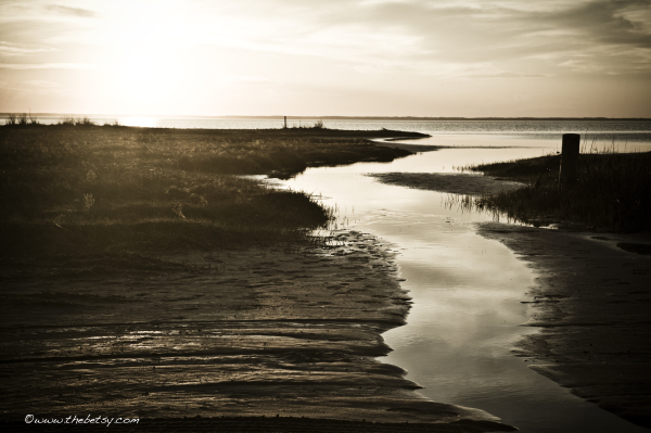 assateague, landscape, monotone, sun, bay