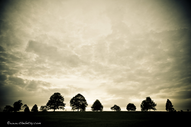 trees, valley_forge, sunset