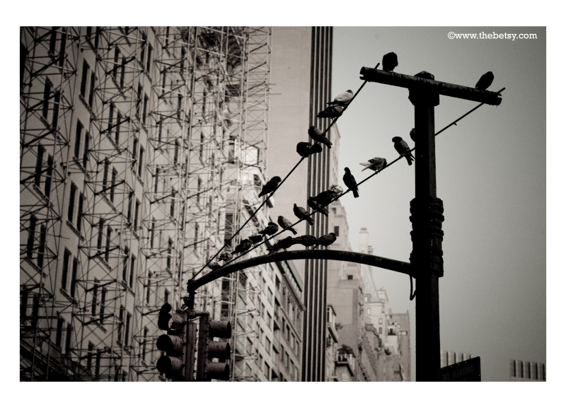 new-york-city, birds, scaffolding, building, stree