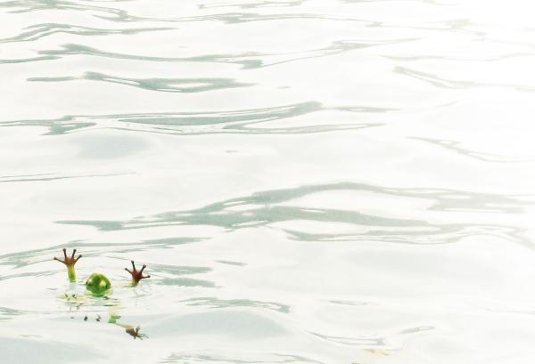 frog, pool, water