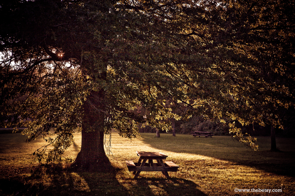 autumn, picnic, table, sunset, french-creek, tree