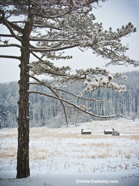 winter, snow, valley-forge, park, cabins, tree