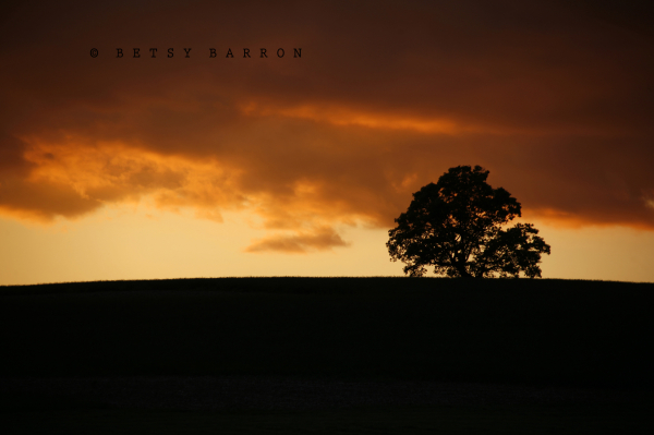 sun, tree, farm, sky, sunset, orange, silhouette