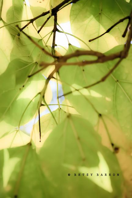 leaves, tree, high-key, sun, bright, shine