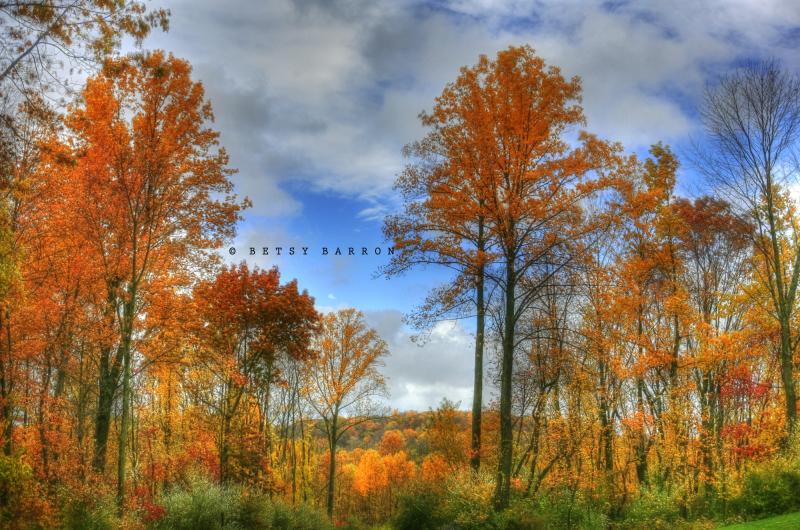 fall, autumn, colors, leaves, pennsylvania
