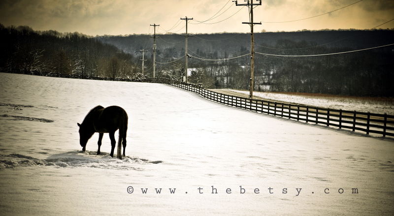 horse, farm, winter, snow, fence, field, farm