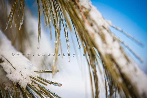 pine, ice, frozen, trees, sun, blue, sky, morning