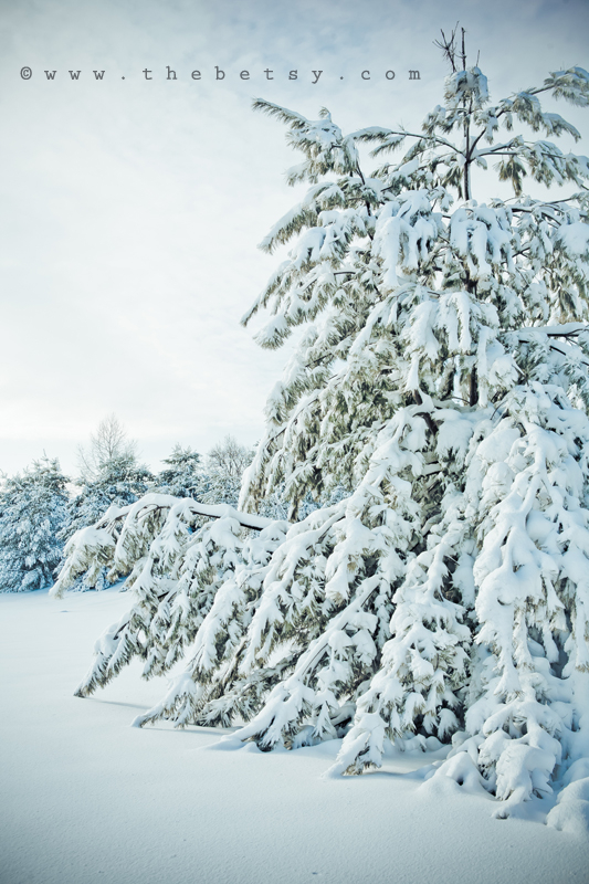 tree, nature, snow, winter, limbs, branches