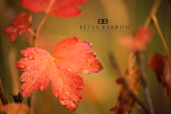 maple, orange, red, leaf, autumn, fall