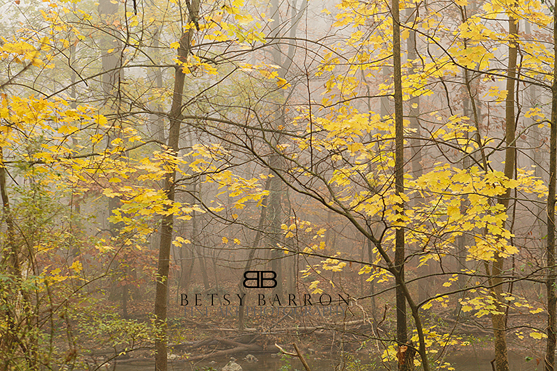 trees, autumn, yellow, fall, fog, morning, penn