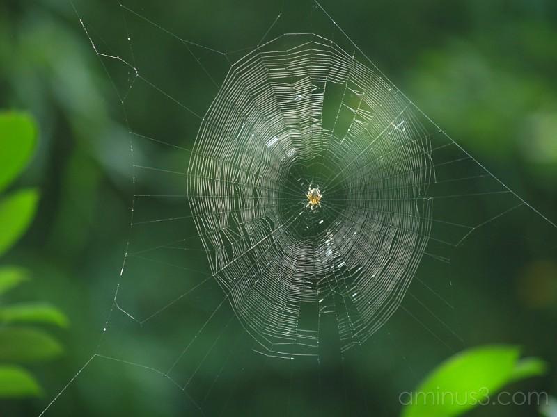spider network