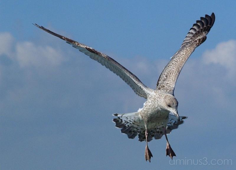 seagull dover calais sea minch
