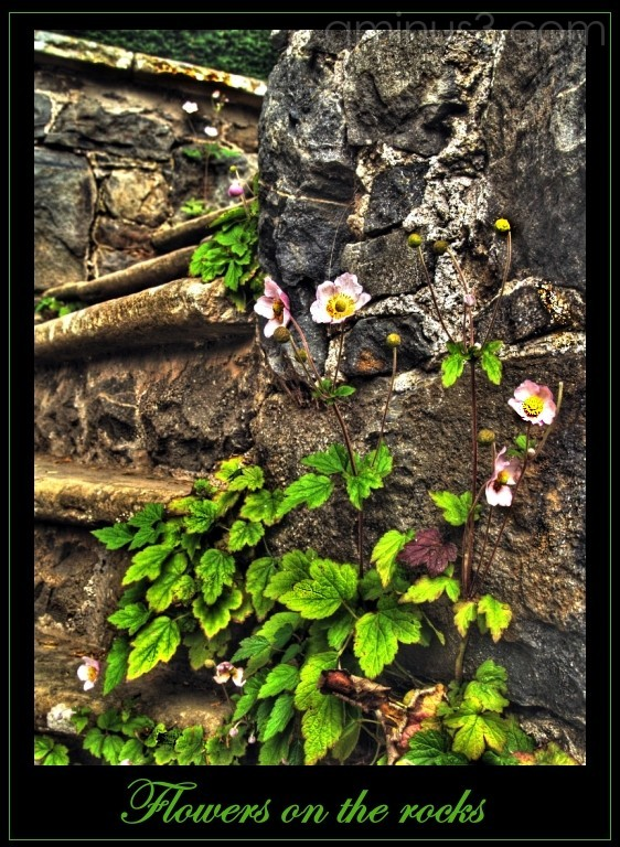 Flowers on-the-rocks