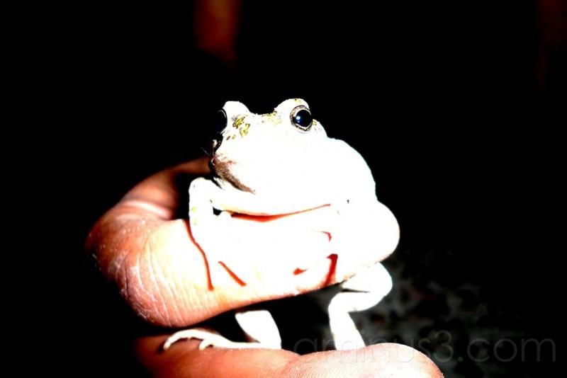 frog pet tehan iran