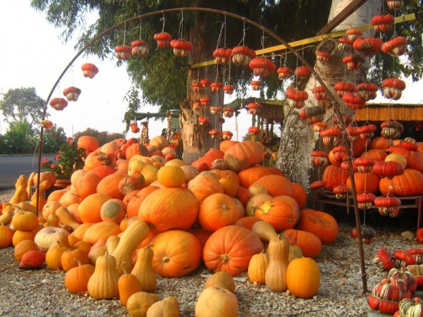 Orange pumpkins hanging