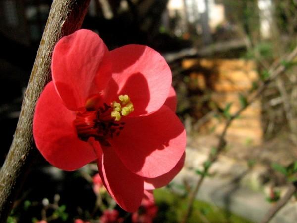 flower red spring garden