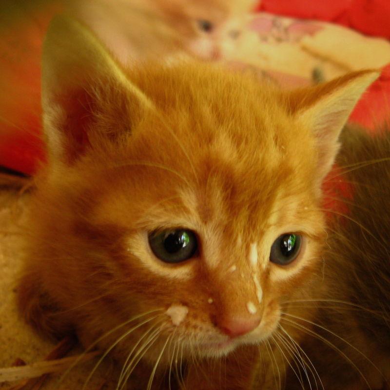 Kitten cute milk