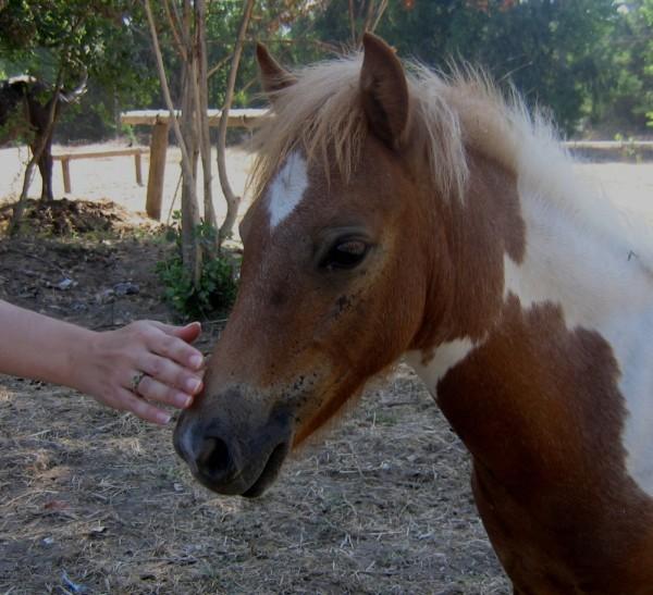 pony hand caress