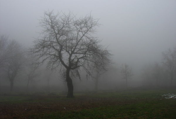 trees fog zarouchla peloponnese Greece