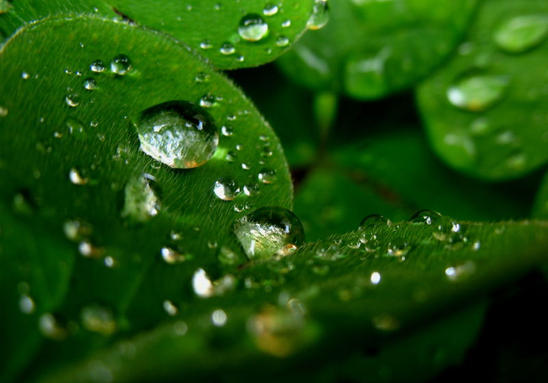 drops plant rain macro