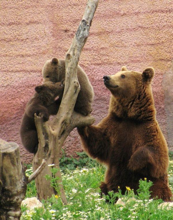bears attica zoo park