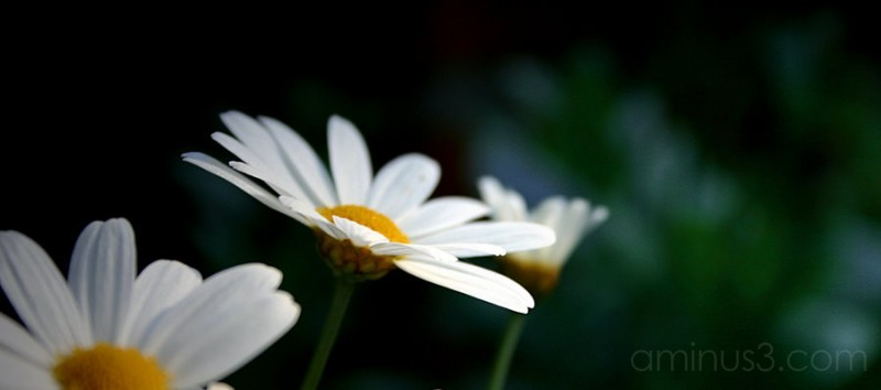flower cool art photography