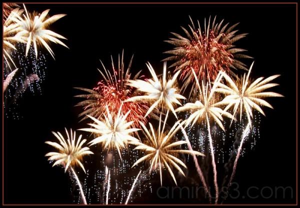 a fireworks bouquet
