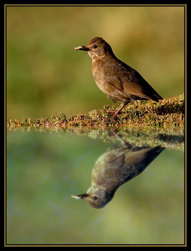 Breakfast-reflection