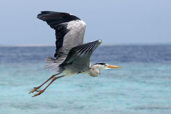 Joe the egret