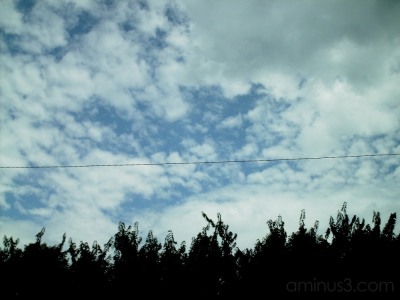 sky, wire and plants