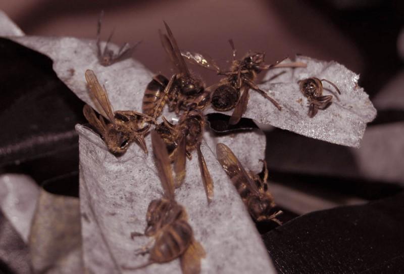 hornets on gaffers tape