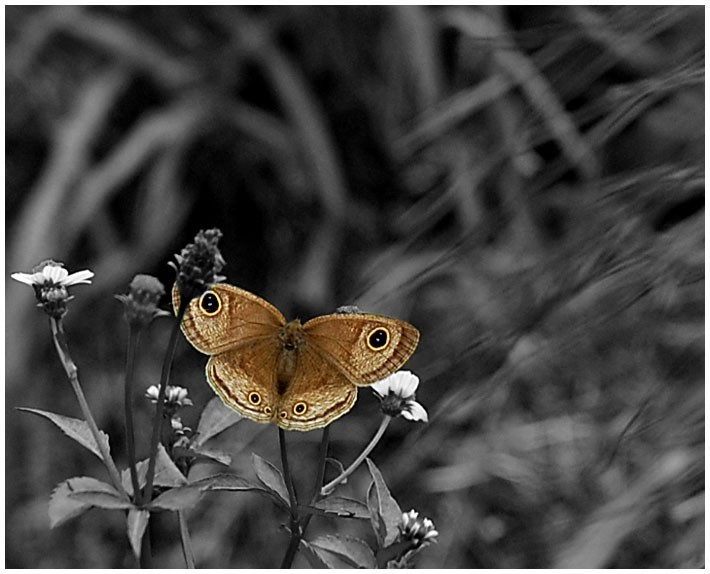 a butterfly..