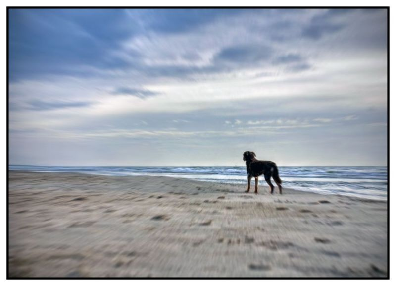 Dog on the beach, waiting for something.