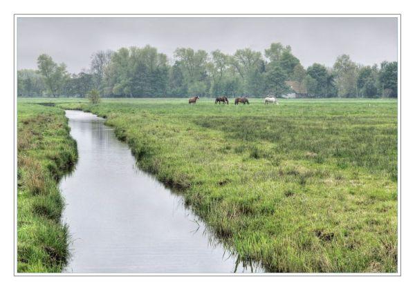 Friesisches Moorland