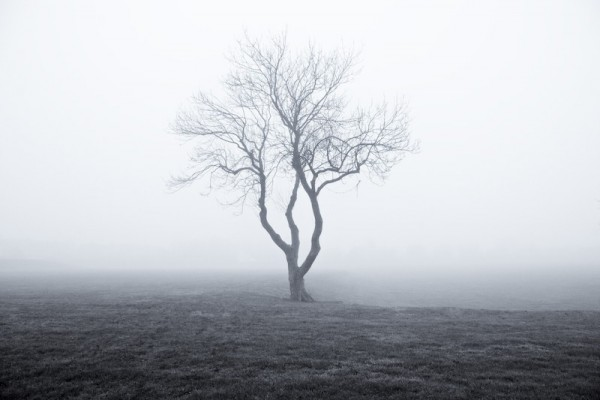 Tree, Mist, Bleak