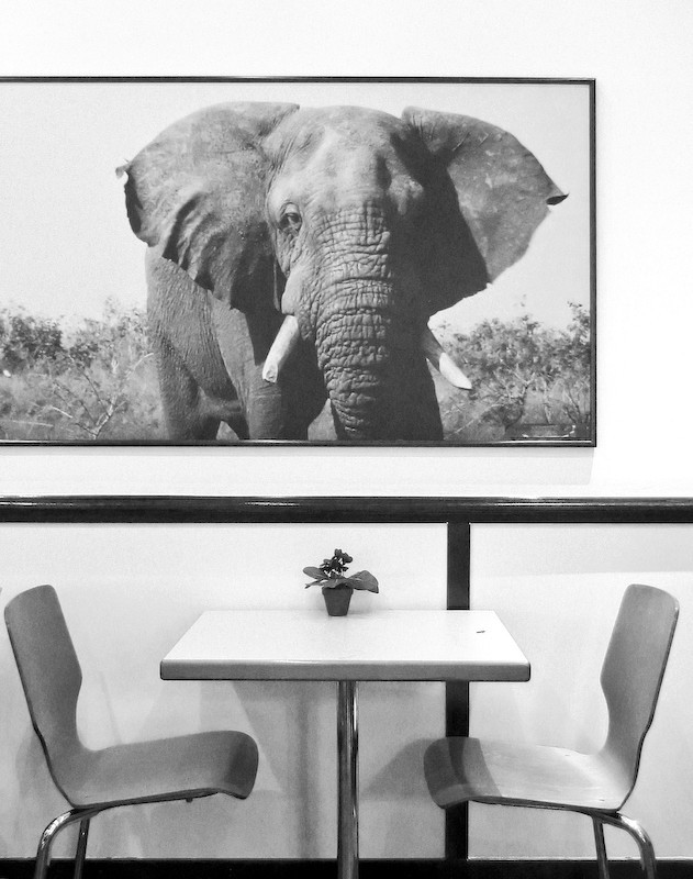 elephant, table, flower