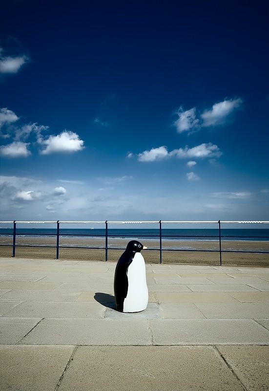penguin redcar