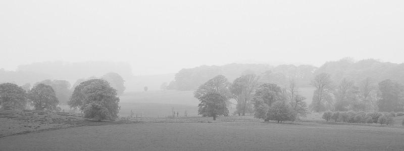 alnwick field trees landscape mist