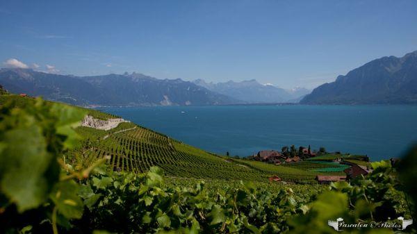 suisse,paysage,lac leman,2011