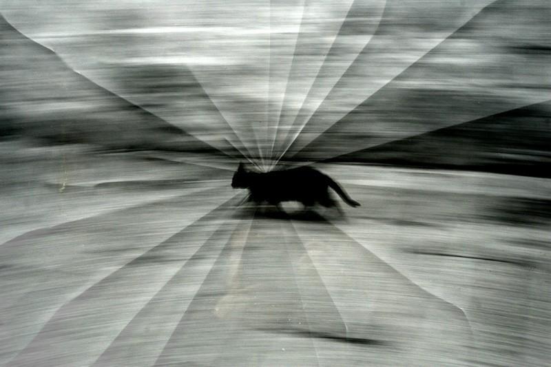 Gato y cristal roto