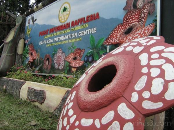 Rafflesia Information Centre, Tambunan, Sabah