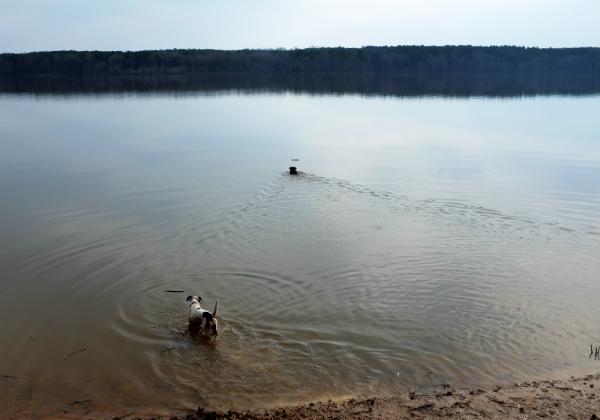 Dogs at Falls Lake, NC