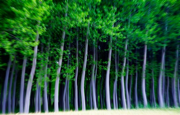 the ghost forest