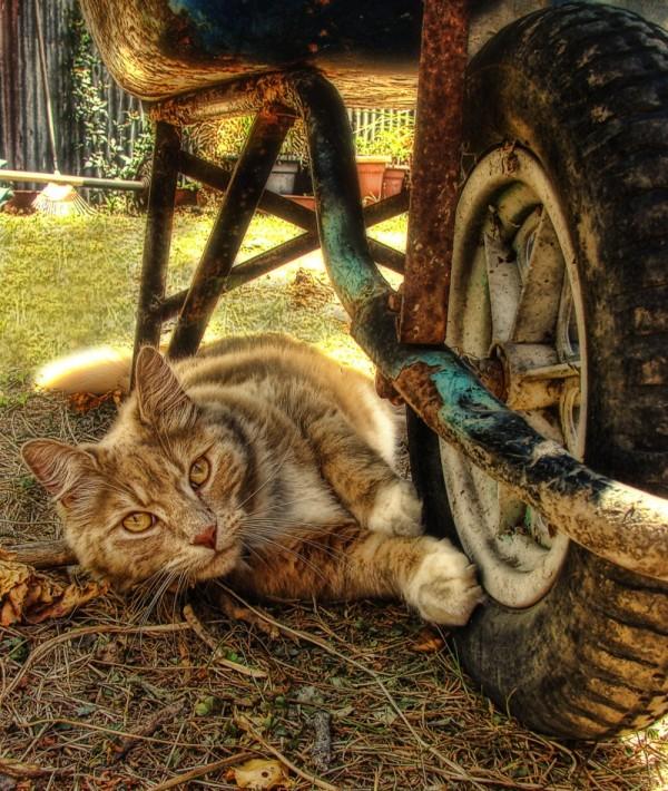 Gardening Kitty