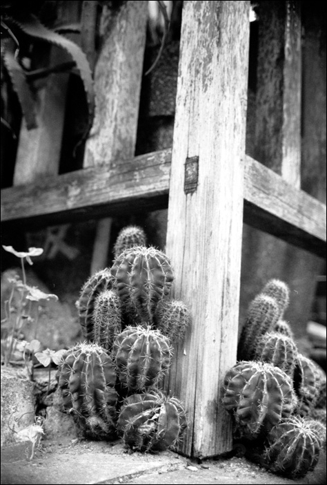 cactus and fence フェンスとサボテン (tsukiji, japan)